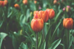devenir fleuriste